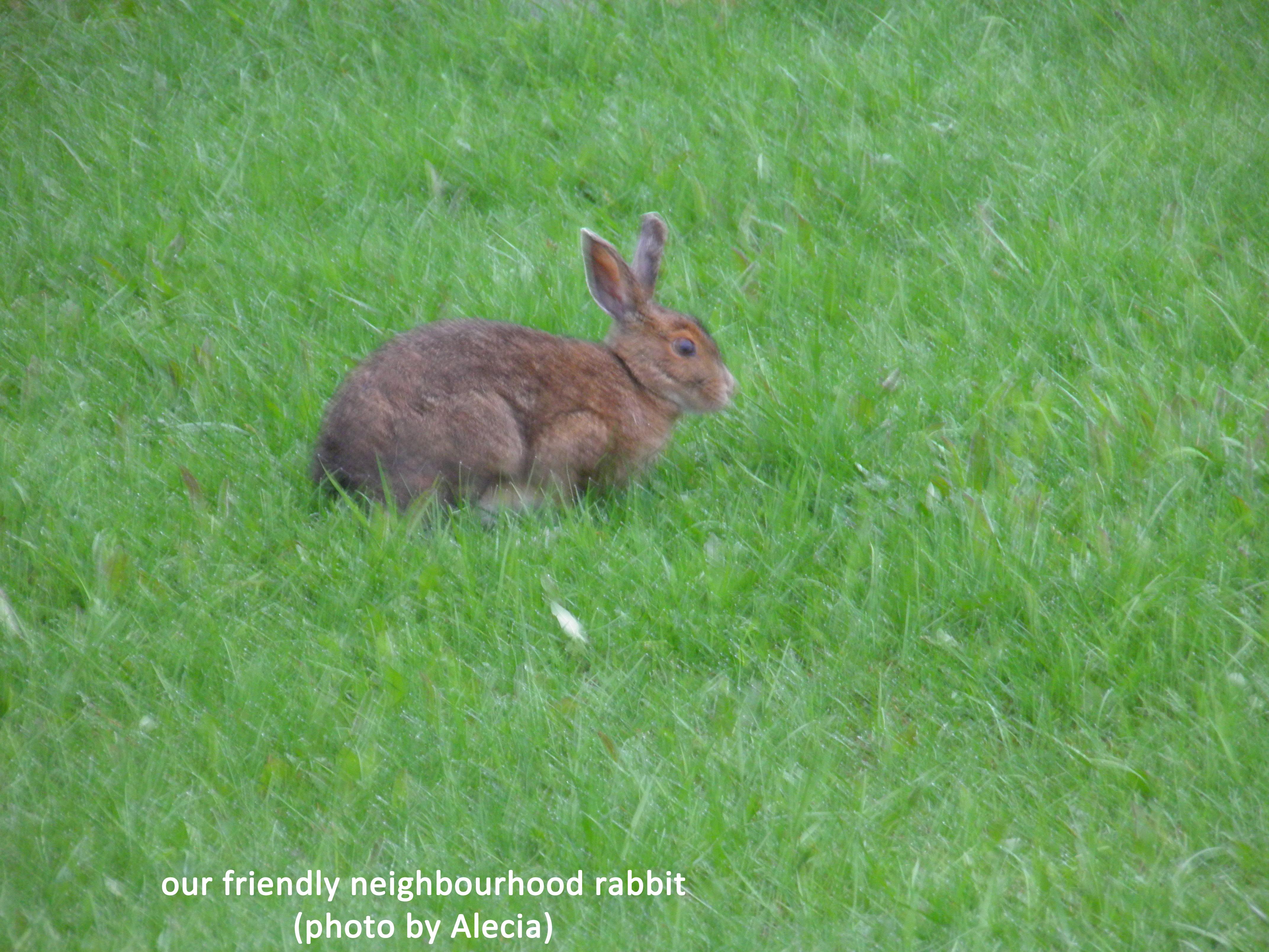 Our friendly neighbourhood rabbit